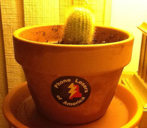 Roy The Cactus (from Mike Anderson Bell)